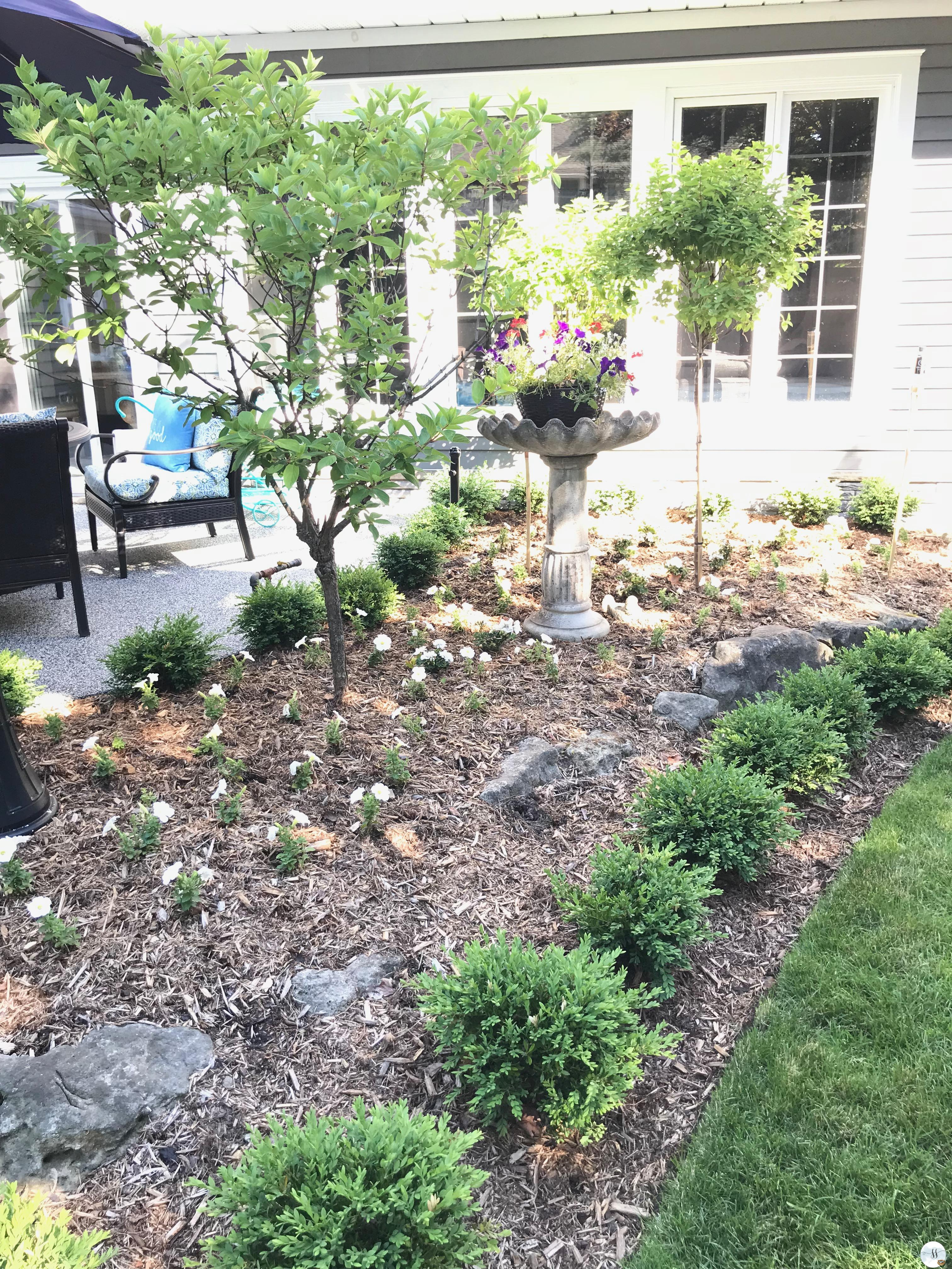 low maintenance garden, hydrangea trees and boxwoods. Tips for caring for your petunias visit my blog