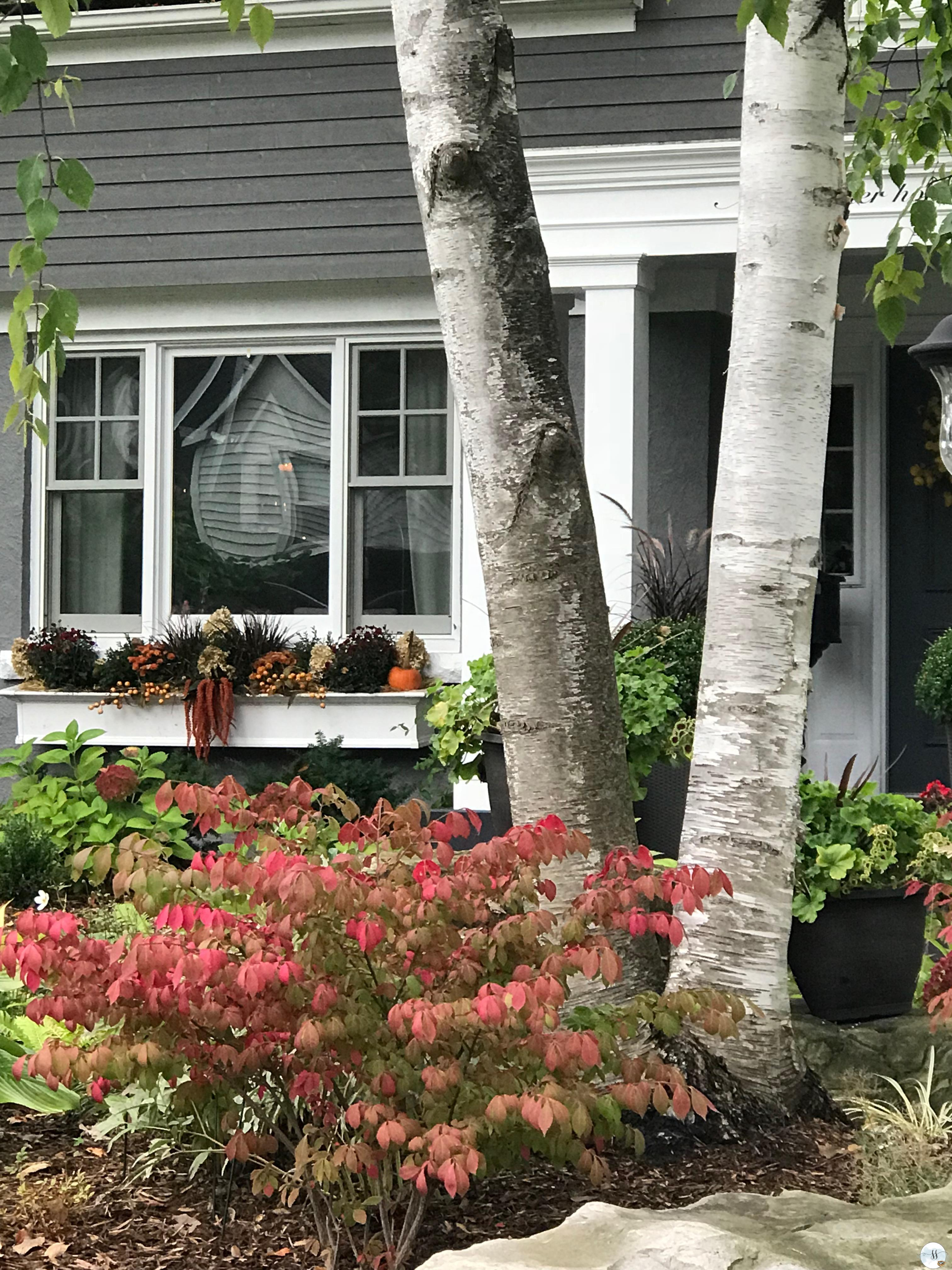 fall gardening, window boxes, grey house,